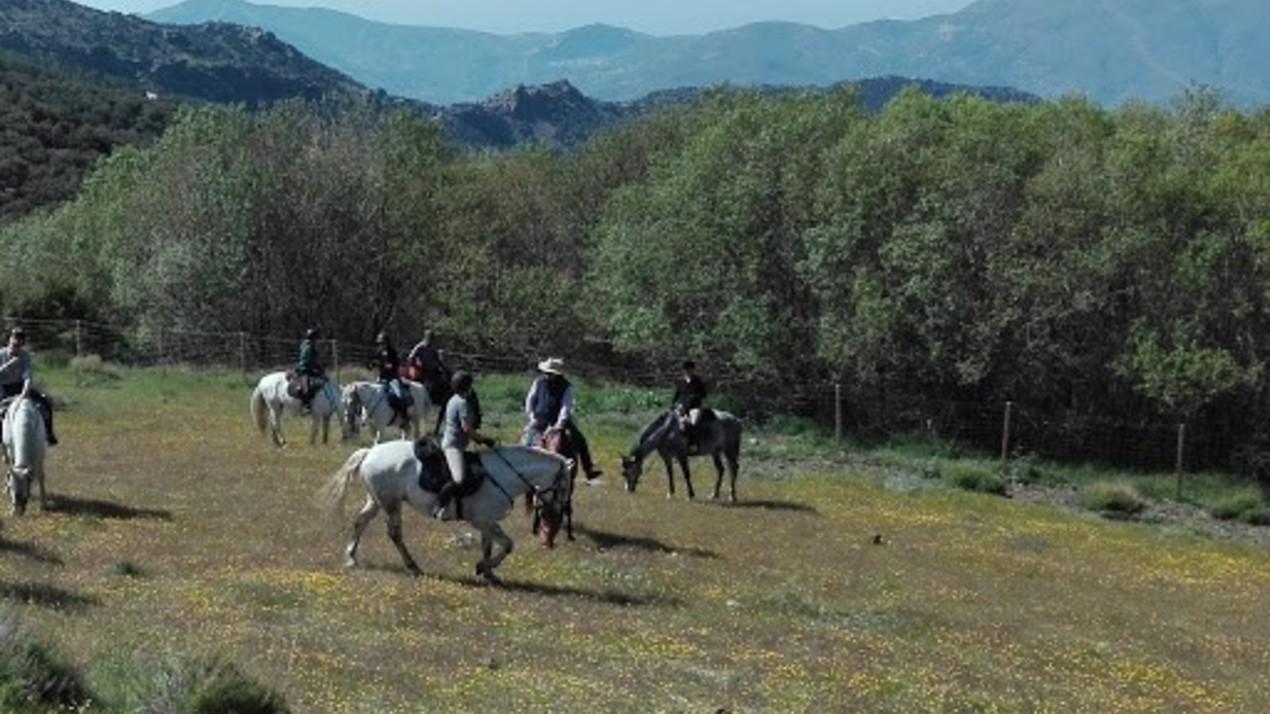 Sulayr trektocht te paard in zuid-spanje, andalusie
