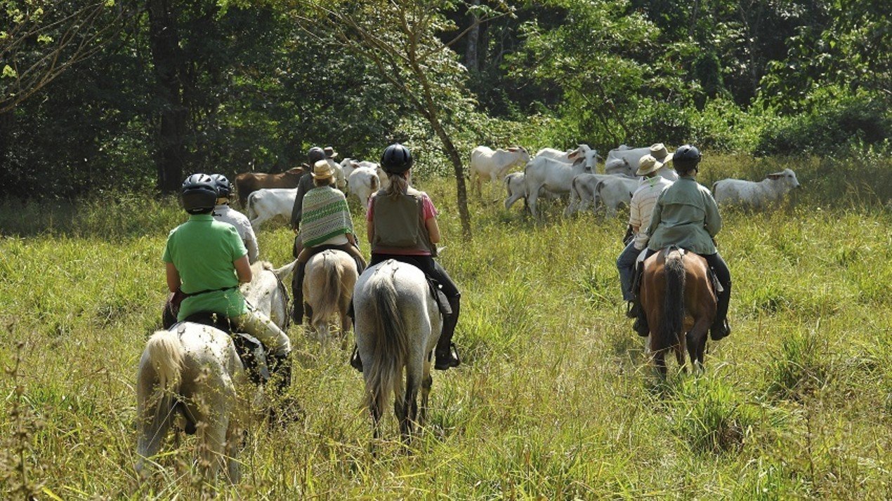Costa Ricaans, Rainforest Adventure Ride, te paard